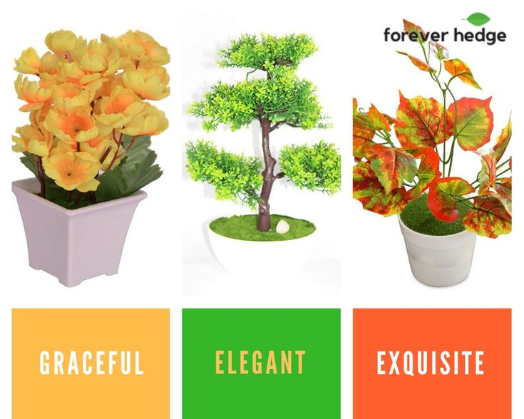 Beautify your #home and #office with fake plants. Select from a wide variety of #designer plants and transform everyday space into a wow space.  . For delivery and installation services visit the link. . . #ThursdayThoughts #decoration #decor #art #home #shoplocal #interiors #trees #plantdecor #artificialplants #greenery