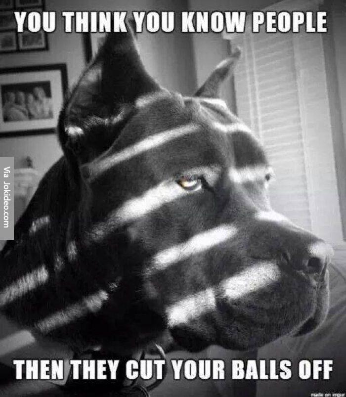 Poor dog meme - http://www.jokideo.com/