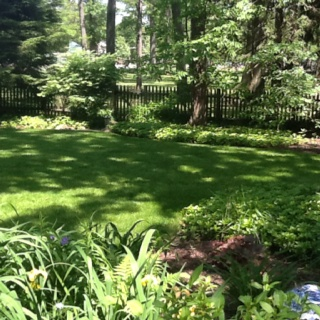 Great Spring...Back yard...expensive lawn.