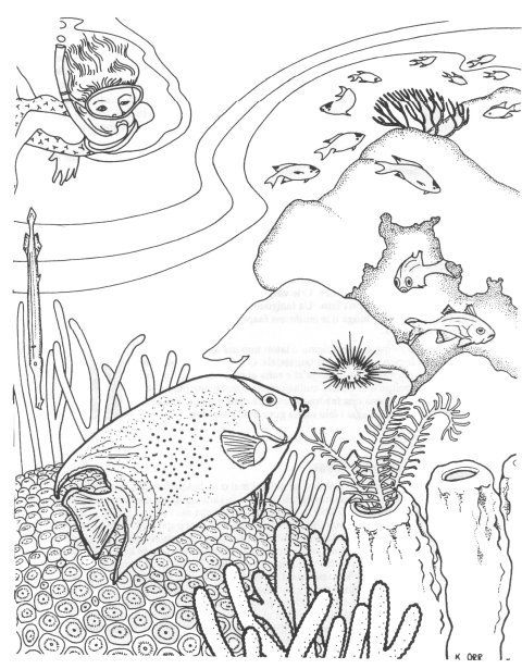 sea creature coloring pages schools of fish