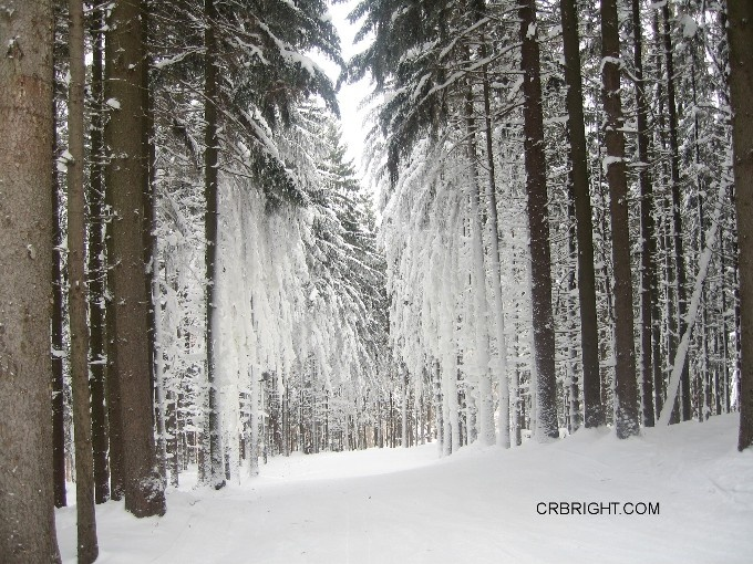 #Trails like this are why I love skiing at Holiday Valley in Ellicottville, NY.  Ellicottville NY Directory of Local Stuff   Like! Thanks    http://www.linksbuffalo.com/place/theodore-roosevelt-inaugural-national-historical-site/