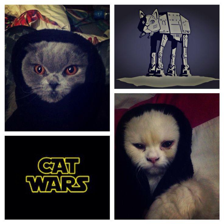 Mis estrellas de #catwars!  #cat #kitty #kitten #cats #gata #gatica #gatita #starwars #lavidadenala #lavidadelucre #minino #animal #pet #mascota