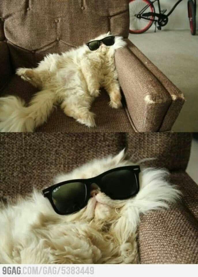 Epic Fail Fat Cat Epic Fail Fat Cat Hangover Cat
