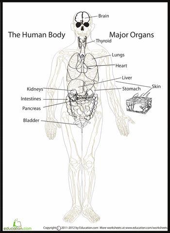 16 besten human body Bilder auf Pinterest | Anatomie, Körperteile ...