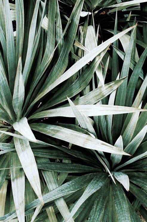 Tumblr Plant Wallpaper Iphone