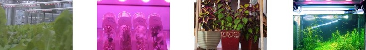 LED Grow Lights For Greenhouses and Growing Indoors