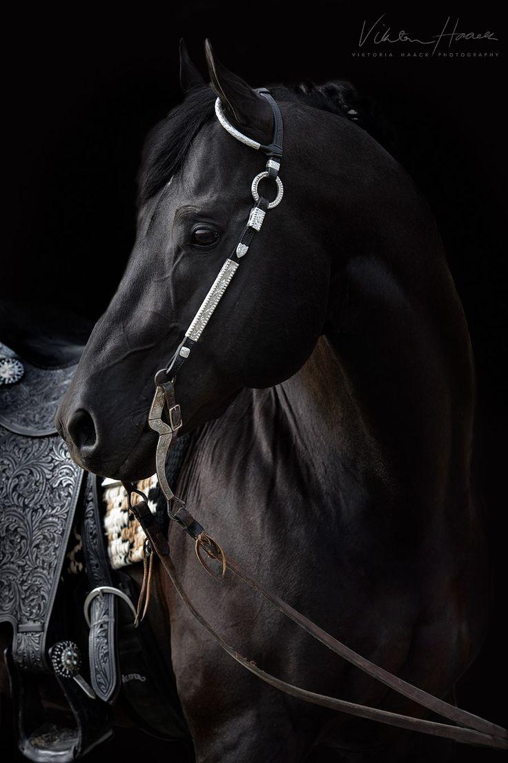 Beautiful black stallion named Isaac.
