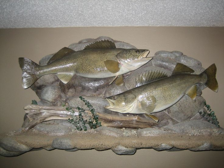 1000 ideas about fishing pictures on pinterest brown for Walleye fishing columbia river