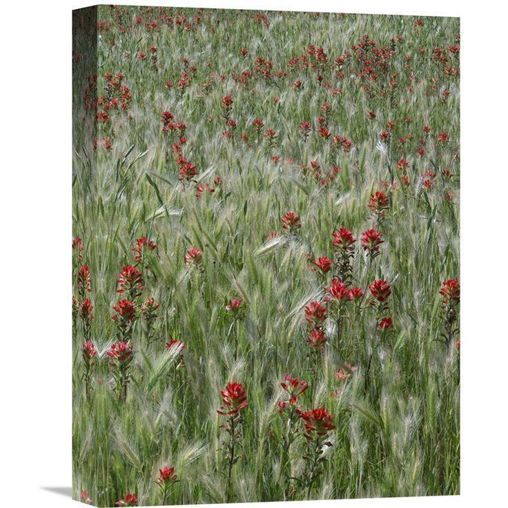 arkansas barley fields Wheat, aphids, and barley yellow dwarf virus 05 feb 2016  arkansas rice: drain timing 1st fields nearing harvest  arkansas crops blog.