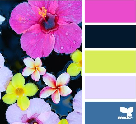 floating flora - design seeds...love these colors together!Black Colors Schemes, Colors Schemes With Black, Design Seeds, Bedroom Colors, Colors Palettes, Bright Colors Schemes, Floating Flora, Black Wall, Colors Inspiration