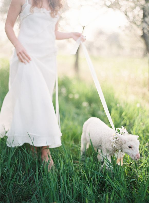 A Spring Baby Lamb for a Cherry Blossom Bridal Shoot