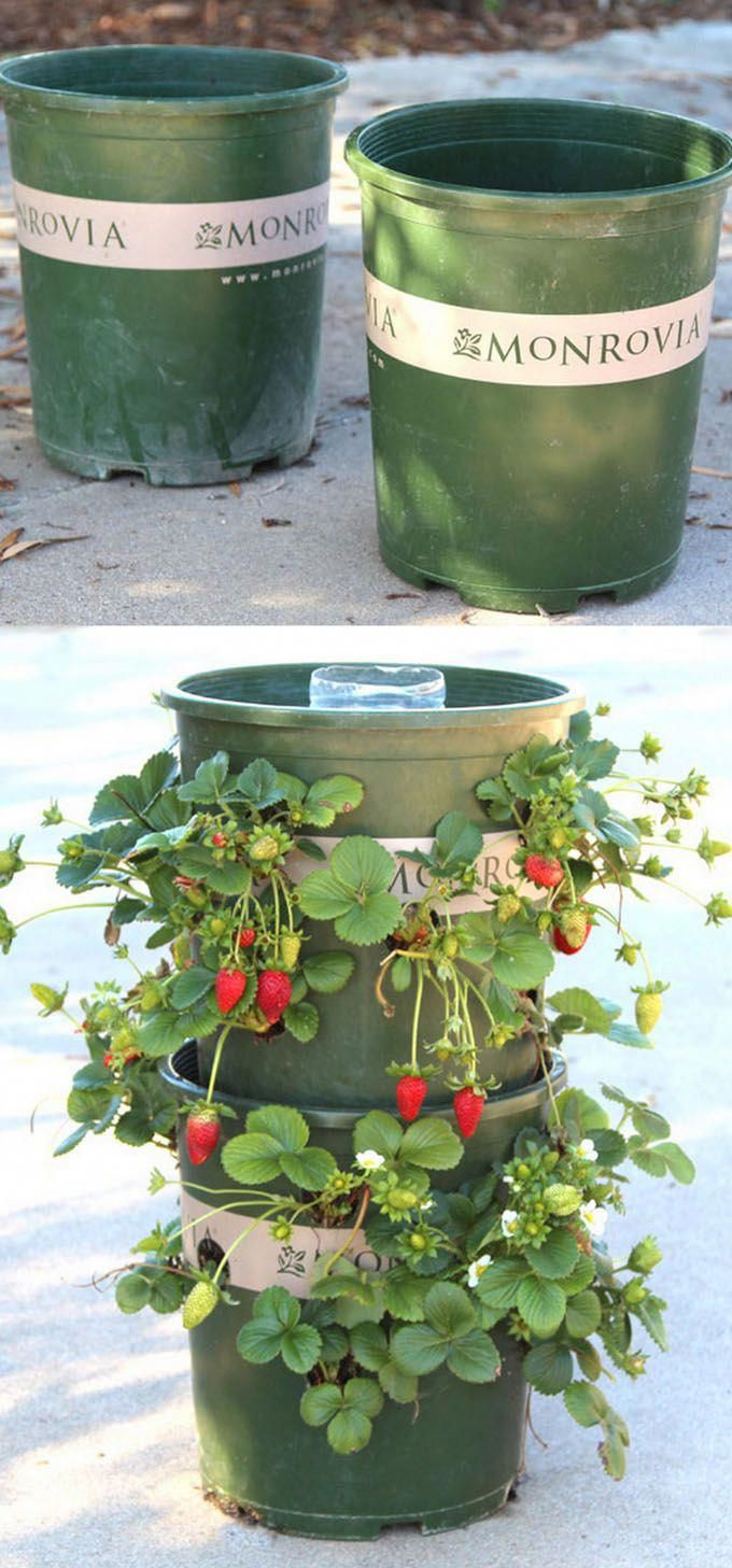 Vertical beds for strawberries from plastic bottles. Handmade high beds for strawberries 46