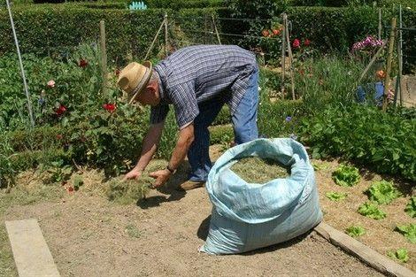 Le paillis doit être régulier et esthétique. La pelouse produit en moyenne un kilo de tonte par m² et par an. Autrement dit, 300 kg pour une superficie de 300 m². Sachez profiter de cette manne nutritive. Tonte-mulching Fini le ramassage ! Coupées très...