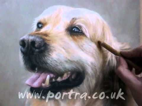 Speed Painting - Dog in Pastels - Golden Retriever By Mary Herbert