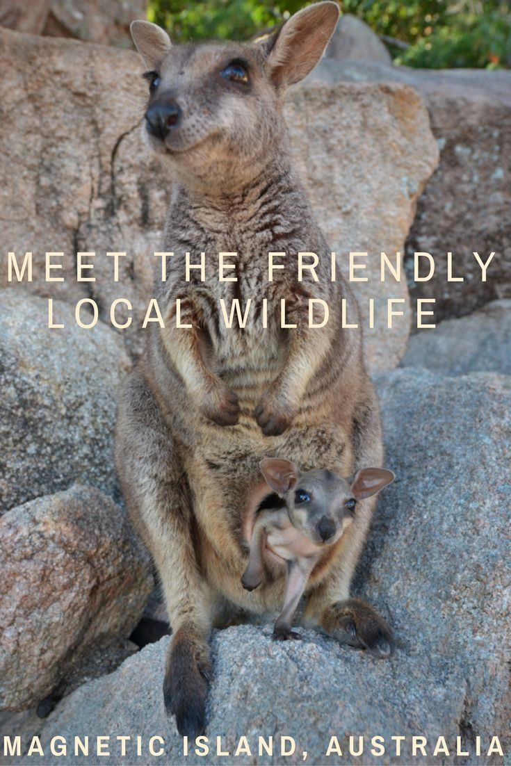 You can get real close to the friendly wildlife on Magnetic Island, Australia!