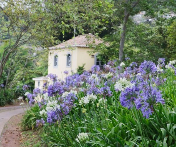 Agapanthus How To Grow And Care For In 2020 Agapanthus Agapanthus Garden Agapanthus Plant