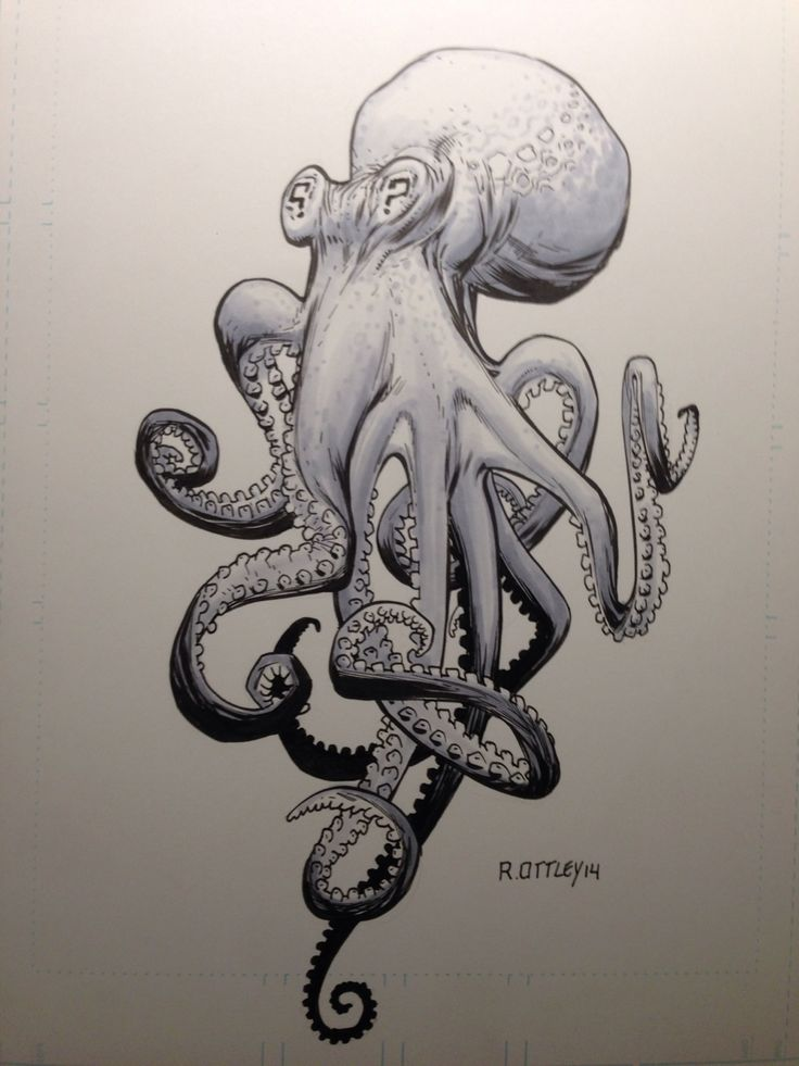 Octopus by RyanOttley.deviantart.com on @deviantART