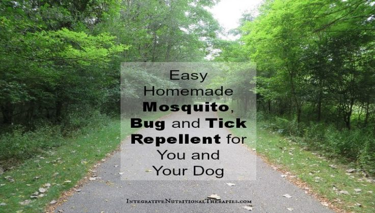 easy homemade mosquito bug and tick repellent for you and your dog homemade bug repellent. Black Bedroom Furniture Sets. Home Design Ideas