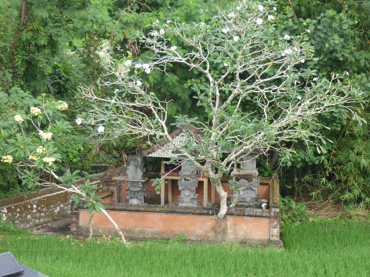 family temple in the rice field