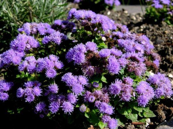 Presentamos a continuación cinco plantas que pueden ayudar a mantener nuestro jardín o patio libre de mosquitos. Son plantas ampliamente conocidas por su capacidad para ahuyentar a estos molestos v…