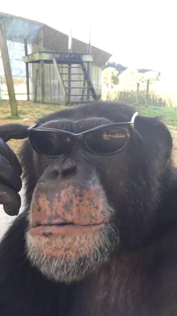 Dating apina Wrangler