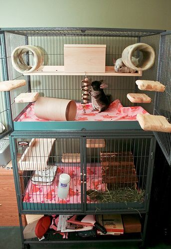 Lovely symmetrical chinchilla cage setup.