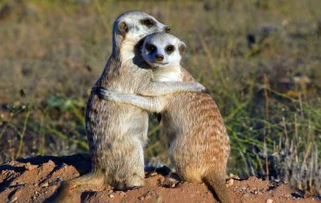These guys know a friendly hug can make you feel better any day of the week:   27 Tiny Animals That Will Warm Your Heart Today