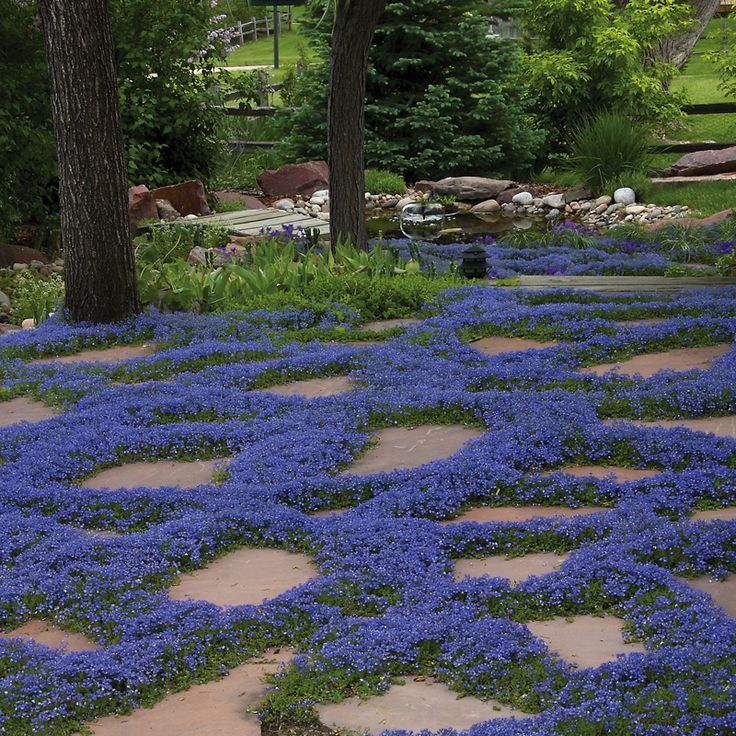 59 best stepables images on pinterest garden gardens for Landscaping ground cover plants