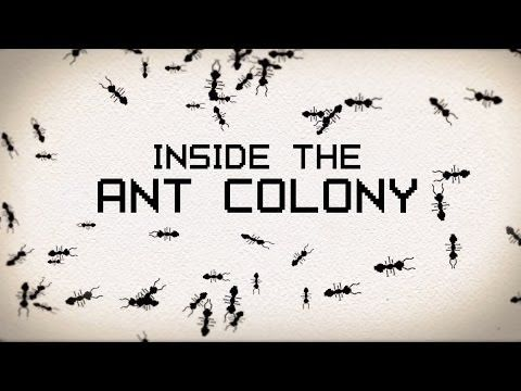 A TED-Ed Animation Exploring the Complex Social Organization and Construction of Ant Colonies