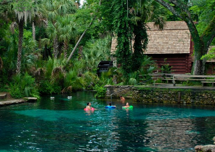 Swimming at Juniper Springs