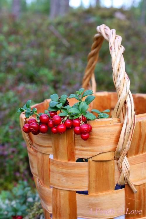 <3 Lingonberries