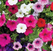 How to improve your garden soil | Van Meuwen
