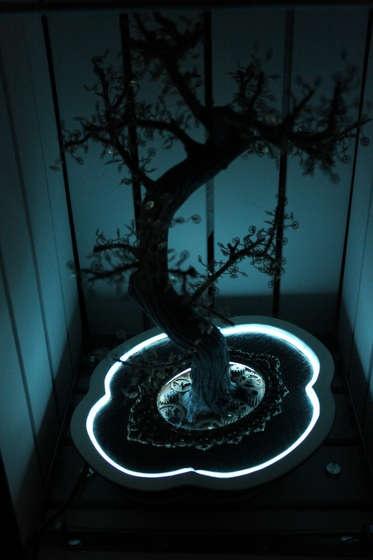 EL wire Steam Burton bonsai