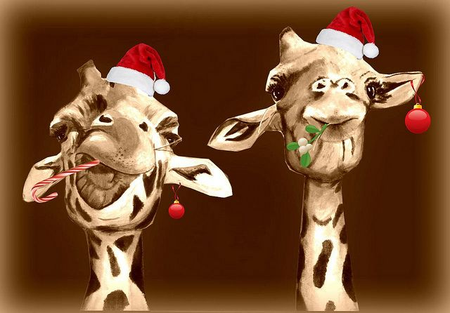 CHRISTMAS GIRAFFES | Christmas giraffe buddies | Flickr - Photo Sharing!
