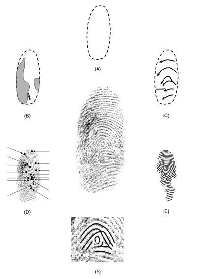 51 best CSI. Fingerprints images on Pinterest