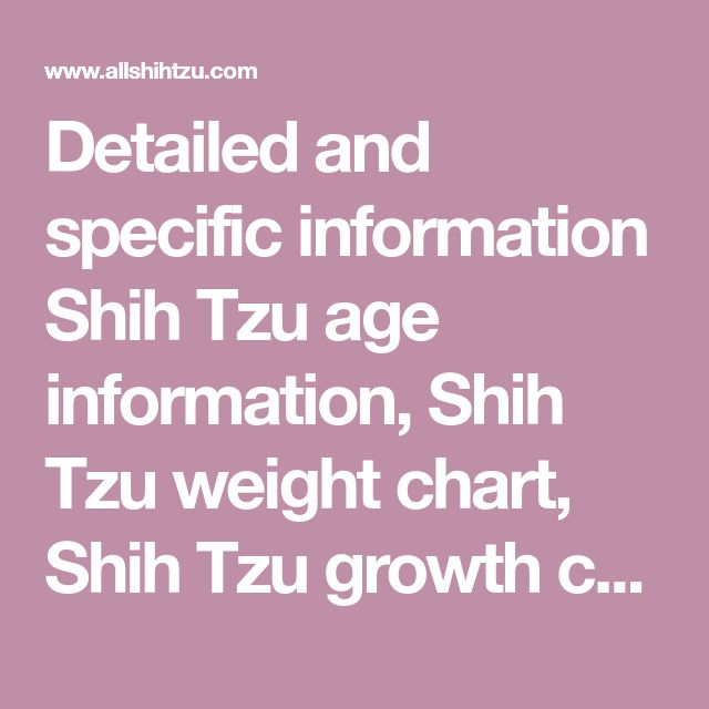 Detailed and specific information Shih Tzu age information