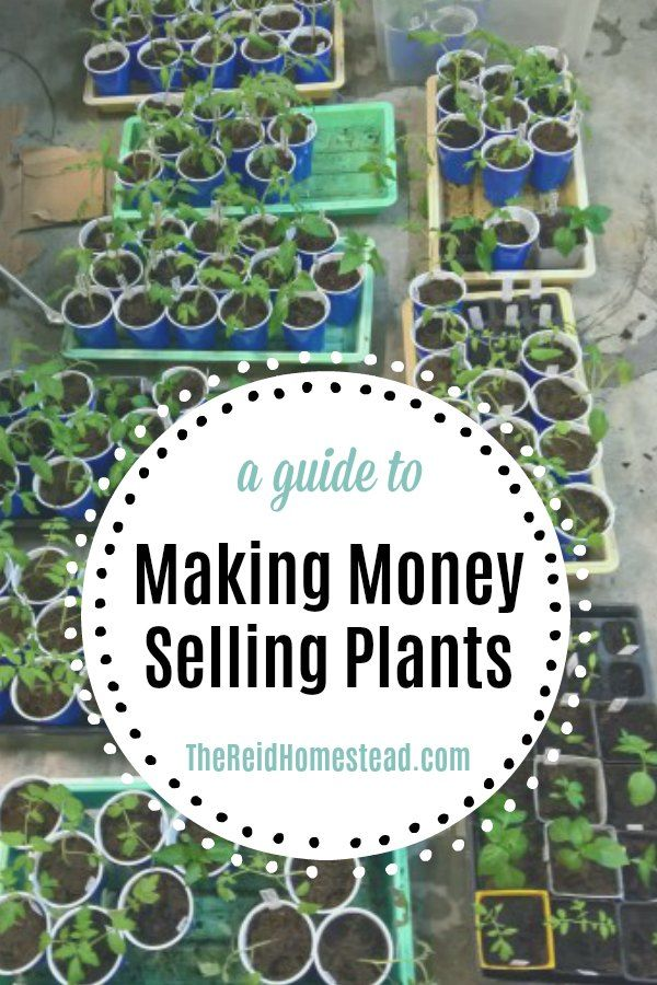 Pin On Homesteading Making Money From The Garden Homestead