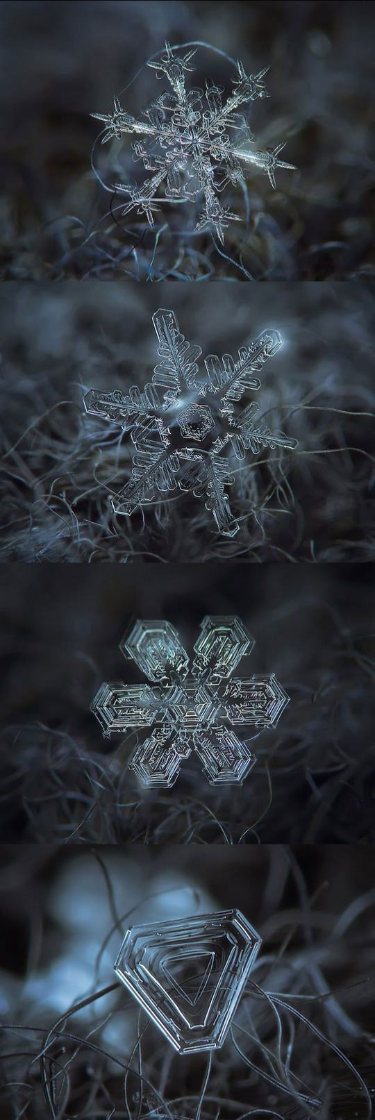 Micro-Photography Of Individual Snowflakes