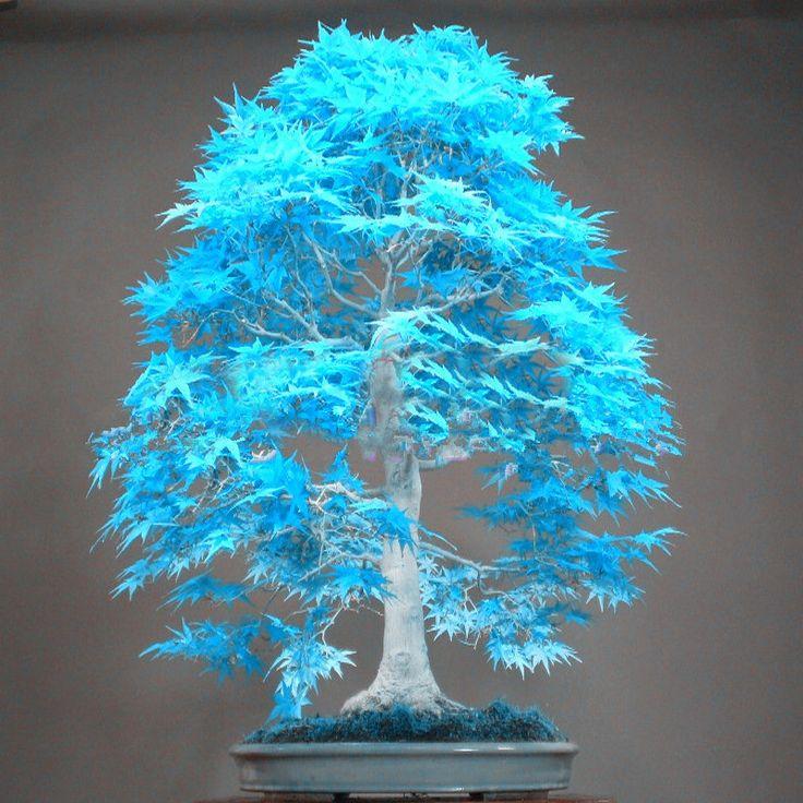 die besten 25 bonsai samen ideen auf pinterest bonsai. Black Bedroom Furniture Sets. Home Design Ideas