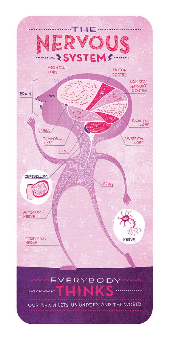 Your Brain in Love Anatomy Poster by Rachelignotofsky on Etsy