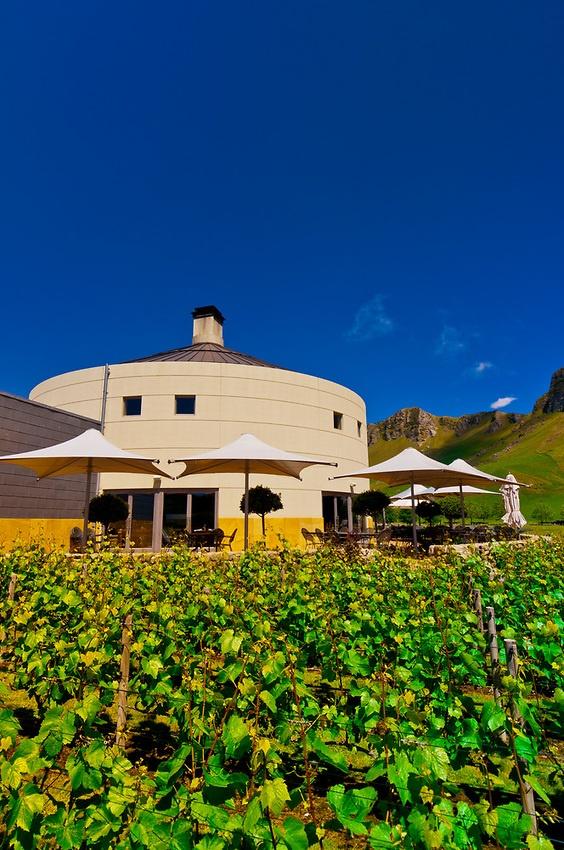 Vineyards of the Craggy Range Winery (Te Mata Peak in background), Havelock North, Hawkes Bay, North Island, New Zealand | Blaine Harrington III