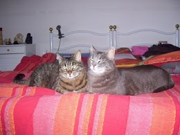 Amo i gatti, soprattutto la mia Saretta, e se ci credessi, penserei di essere la rincarnazione di un gatto(ma non ci credo!) Sono un po' severa, soprattutto con me stessa, non ammetto di sbagliare( e hai voglia se sbaglio!) Amo insegnare