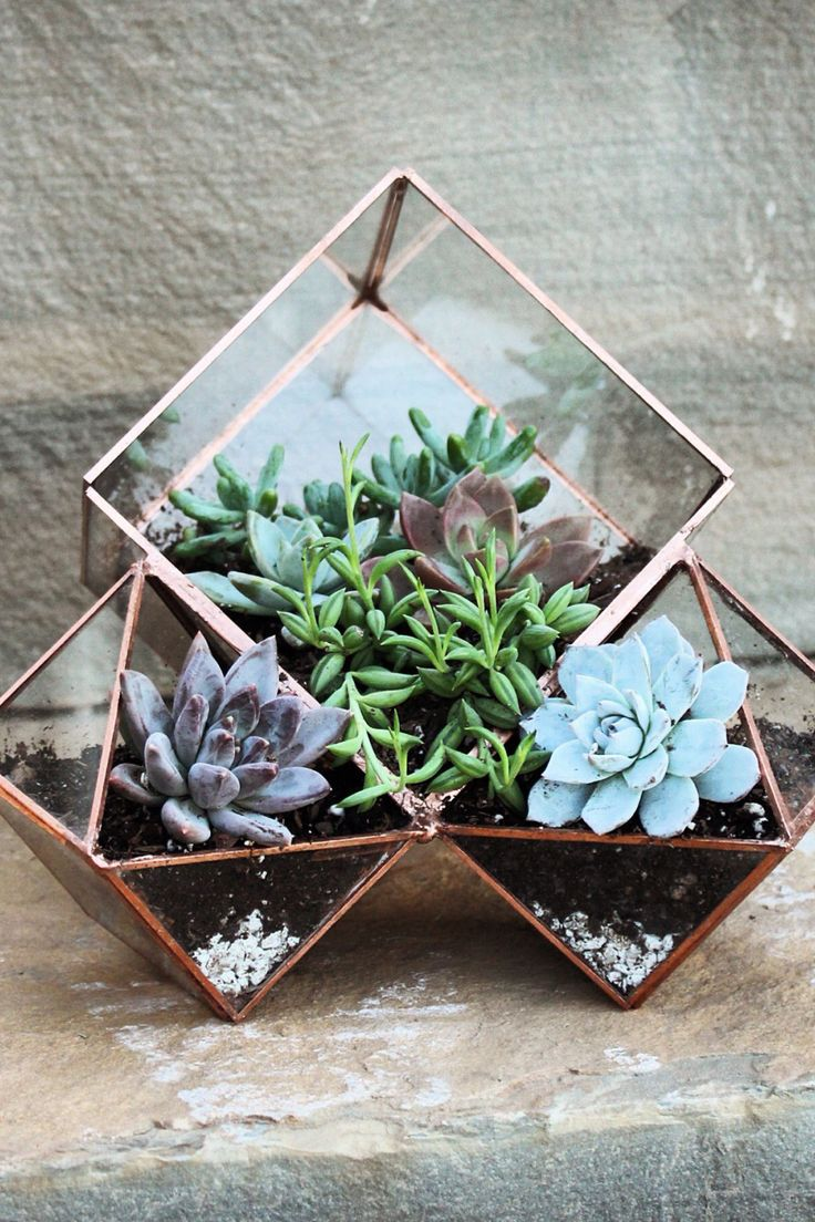 Three terrariums in one planter. Because when it comes to plants, we always want more