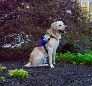 How To Train Your Psychiatric Service Dog