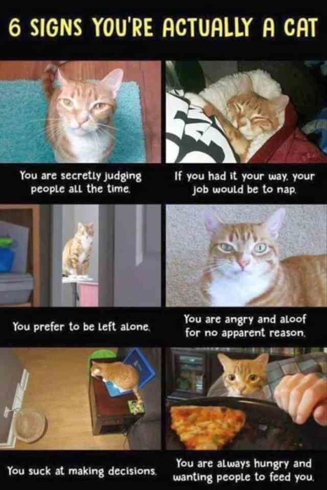 Funny Animal Pictures of the Day Release 4 (30 Photos) – Cats – #cats #The #Photos #Funny #Release