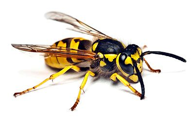 Anger earns a Hornet Omen in TOKENS AND OMENS