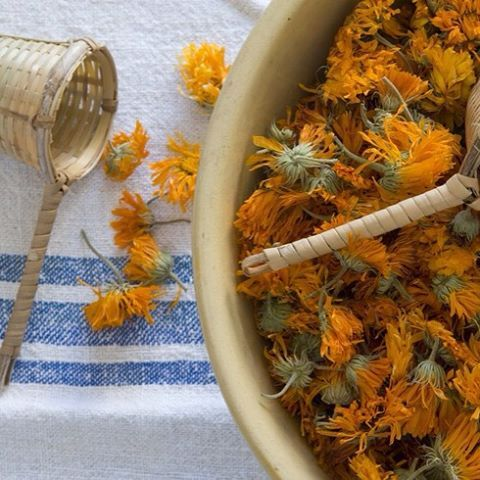 "We've added these pretty Calendula petals to our ""Tea-Tox"" tea. Detoxifies the body, promotes liver health, and boosts energy levels after infection."