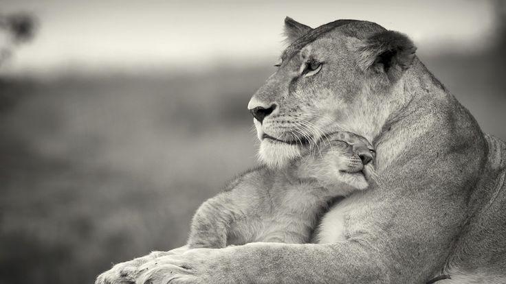 desktop black and white animal images download