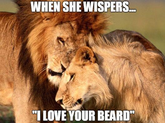 Top 60 Best Funny Beard Memes