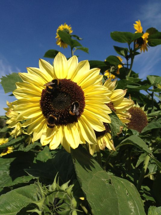 Gallery | Physic Garden Project The Bees are really Healthy too